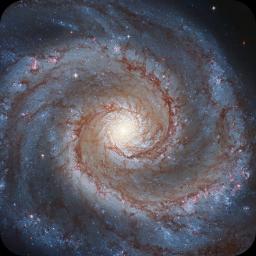 M51 HLA